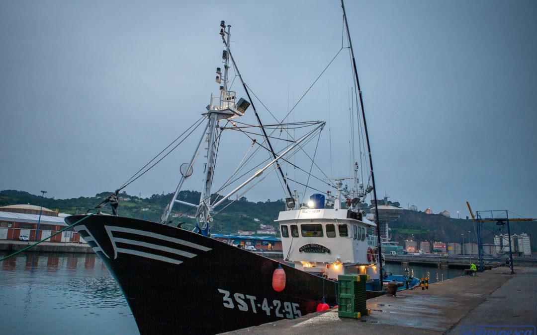 How the white tuna (thunnus alalunga) is caught?